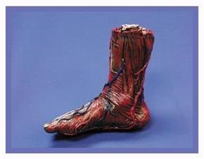 Skinned Right Foot Decoration Prop